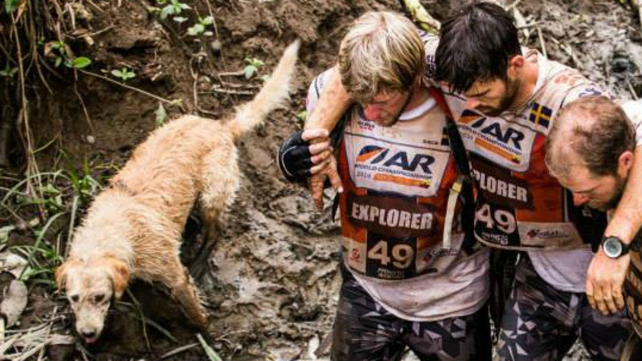 this-dog-followed-four-endurance-athletes-on-a-dangerous-430-mile-race-just-to-try-to-find-a-home