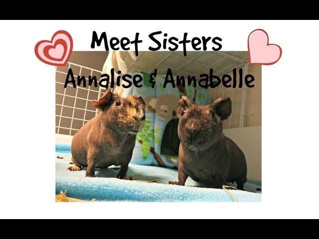 Skinny Pig Sisters: Annalise & Annabelle