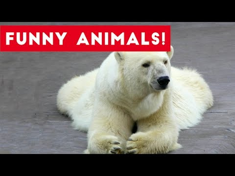 Funniest Pet Clips, Bloopers & Moments Compilation of 2017 | Funny Pet Videos