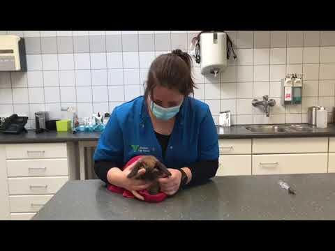 Dwangvoeding of medicatie ingeven bij je konijn