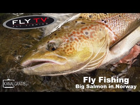 FLY TV - Fly Fishing Big Salmon in Norway (German Subtitles)