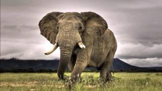 the worlds 25 largest animals and where youd never expect to find them