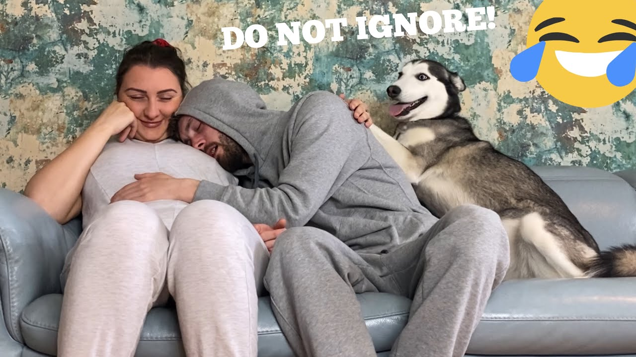 Hilarious Husky Puppy Refuses To Let Me Cuddle My Pregnant Partner!! [FUNNIEST REACTION EVERR!!!]