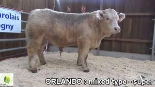 ORLANDO 8434 par Simon Genetic thumbnail