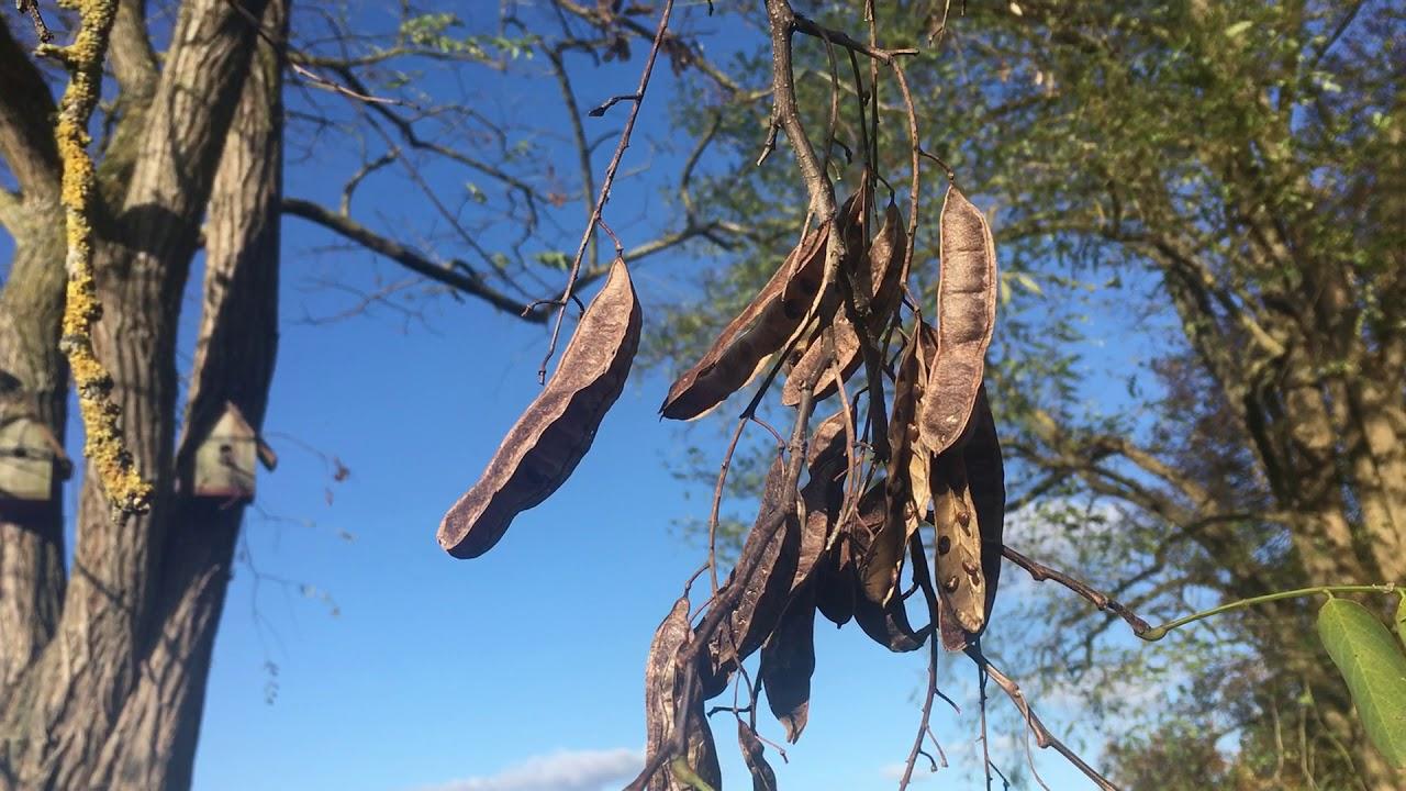 black-locust-pics-femdom-strict-matriach