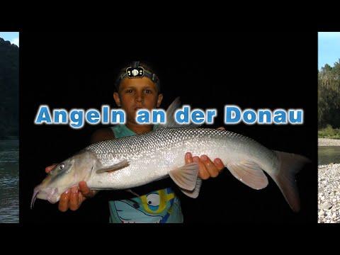 Fischen An Der Donau - Angeln Auf Barben, Wels Und Andere Fische