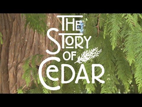 The Story Of Cedar - Sechelt Arts Fest 2015