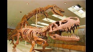 Смотреть видео Денис TV-   Палеонтологический музей им. Ю.А.Орлова/Куда сходить с детьми в Москве? онлайн