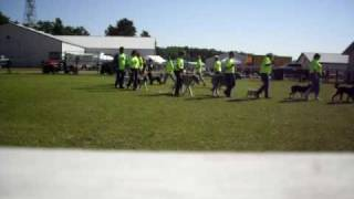 Bemidji Pet Expo. Paul Bunyan Dog Training Association Drill Team