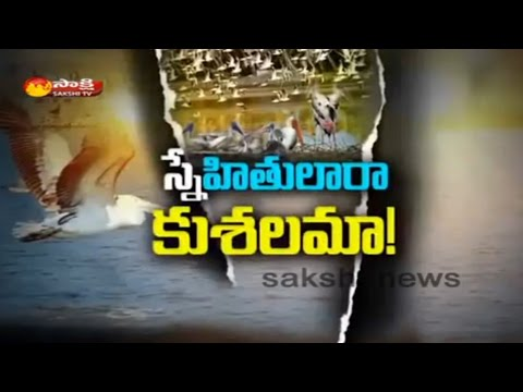 Atapaka Birds' Sanctuary || Krishna District || Sakshi Special - Watch Exclusive