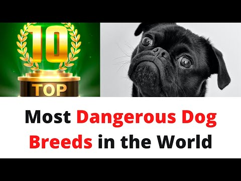 top-10-most-dangerous-dog-breeds-in-the-world,-dogs-names,-hot-dog,-dogs-barking,-dogs-howling