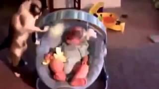 Видео Подборка Приколов с Животными 1 Кошки Обезьяна Коза Смешные Животные