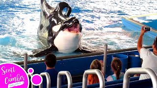 KILLER WHALE TRIES TO EAT HUMANS