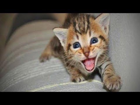 Little Kittens Talking 😂🐱 Cute Kittens Meowning and Talking (Full) [Funny Pets]