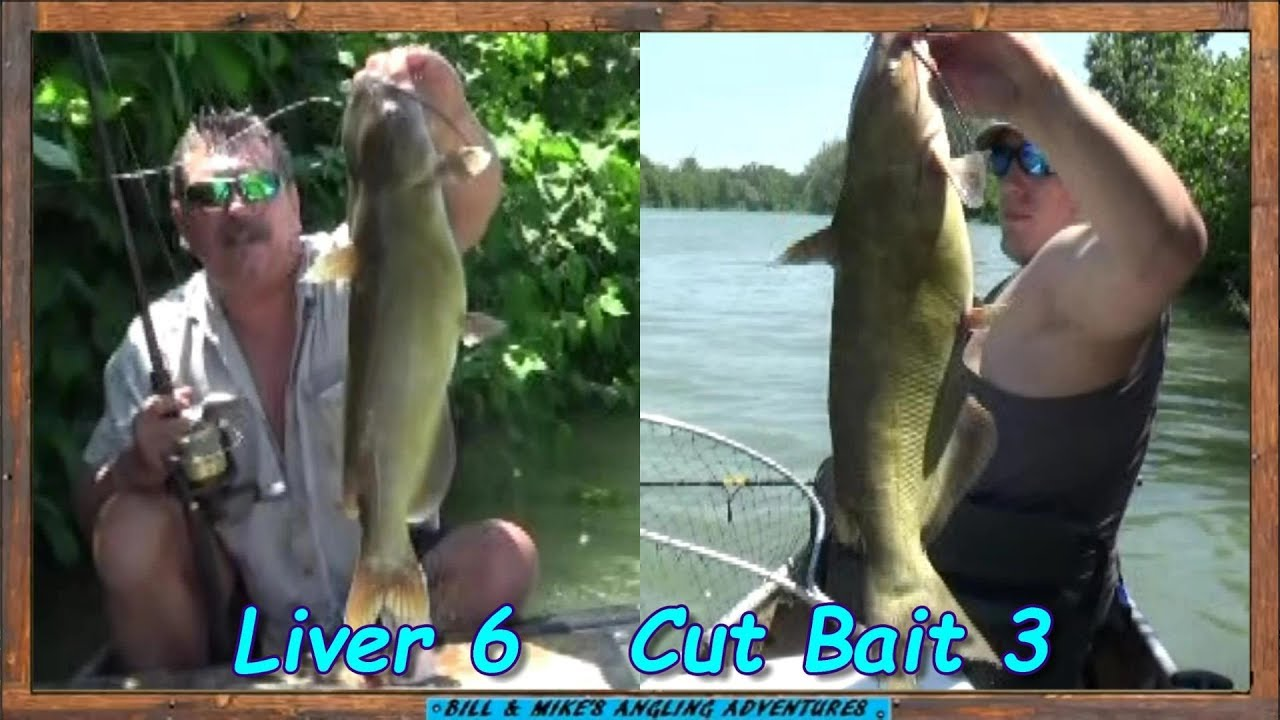 Chicken livers vs cutbait fishing channel cats youtube for Fishing youtube channels