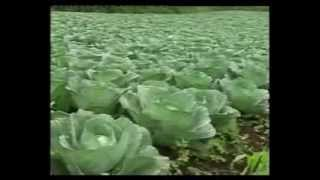 How GNLD's 'Natural Fertilizer' Super Gro Helps Farmers Grow Miracle Crops!