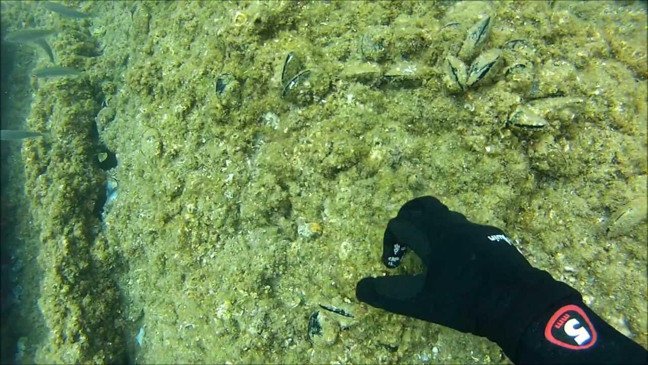 Scuba Diver Into The Mediterranean Sea With Flocks Of Fish ...  |Scuba South France