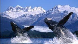 Мир гигантских китов. Тайны океана. Документальный фильм National Geographic.