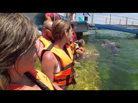 Swimming With Dolphins In Cuba