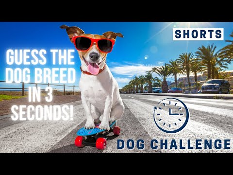 Guess The Dog Breed In 3 Seconds   Dog Challenge #Shorts