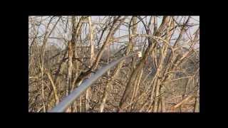 tv-fishing.com Телепередача ''Моя риболовля'' Росія-2 Карасі