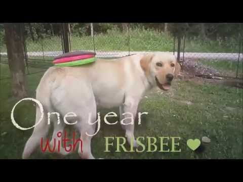 ONE YEAR WITH FRISBEE ♥ Special HD