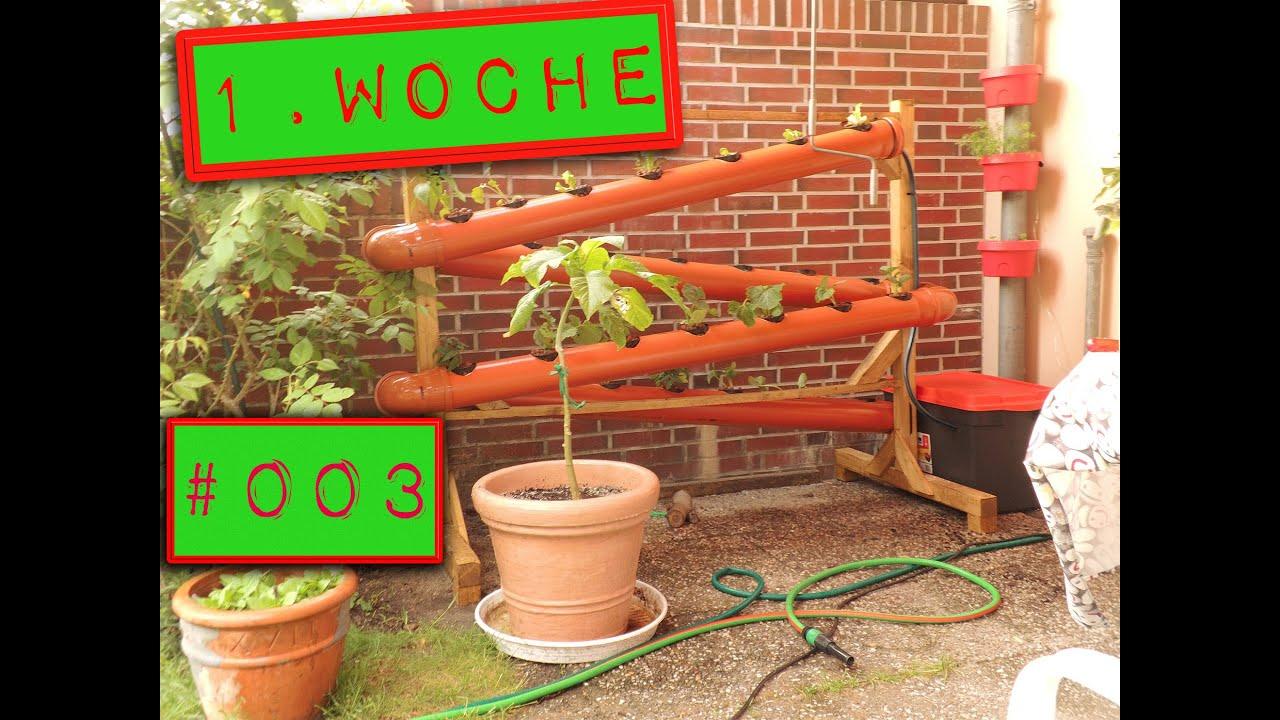 003 eine woche ist um mal sehen wie es aussieht hydrokultur nft system deutsch ger youtube. Black Bedroom Furniture Sets. Home Design Ideas