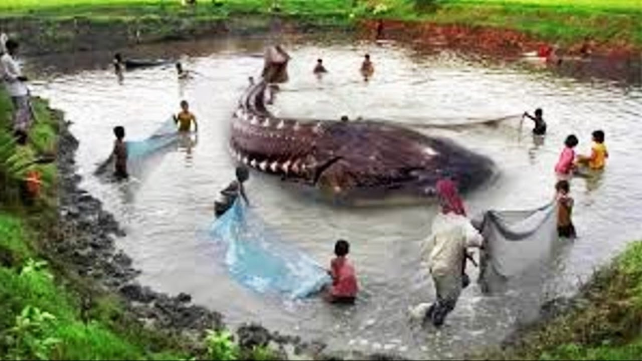 10 biggest fish catches in the world youtube for Watch big fish