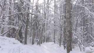 Зима в Зеленограде /часть 3/ - ФЕВРАЛЬ