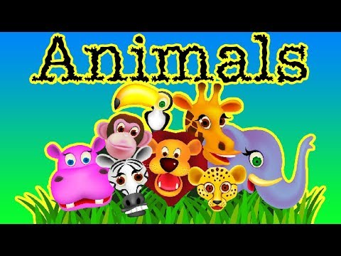 Let's Learn About Animals-SL Kids TV