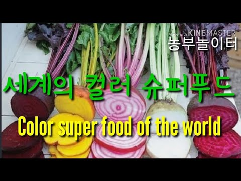 먹으면 엄청 건강해지는 칼라푸드 .색깔있는 컬러 야채 채소 Color super food of the world 고추 무 옥수수 양파 배추 양배추 당근 호박 파프리카 딸기 토마토