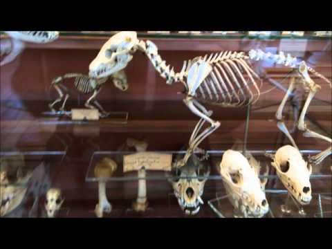 Muséum national d'Histoire naturelle//Марина Зингер