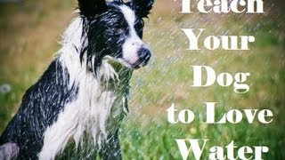 Your Dog And Water - Teach Your Dog To Enjoy The Water