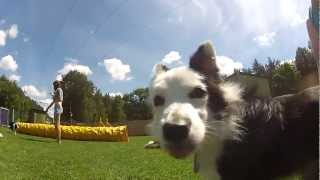 GoPro: First person dogfrisbee view, agility & dogs in and underwater combination - our vacation !