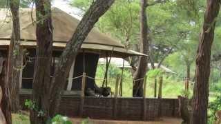 A Family, a Camera, and One Amazing Tanzania Safari
