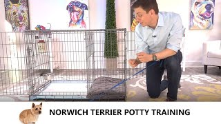 Norwich Terrier Potty Training from WorldFamous Dog Trainer Zak George   Norwich Terrier Puppy