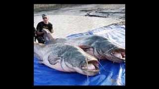 World Record Extreme Animals(WORLDWIDE)