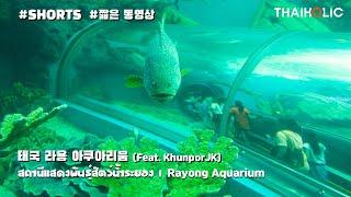 태국 라용 아쿠아리움 방문기 (Feat.KhunporJ…