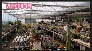 2020년 2월 20일 다육식물~ 인천 서구 청라꽃농원…