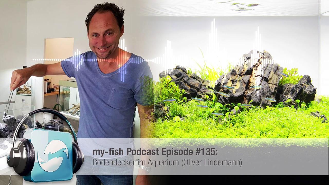 My Fish Org Bodendecker Im Aquarium Oliver Lindemann Youtube