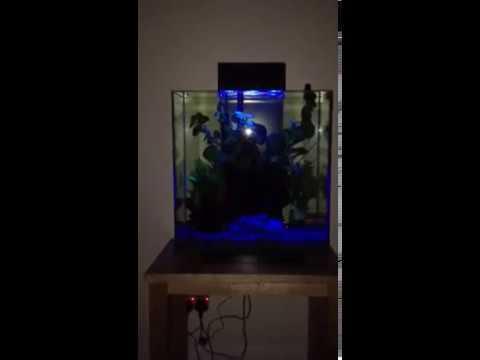 fluval edge 2 blue night lighting youtube. Black Bedroom Furniture Sets. Home Design Ideas