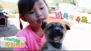 귀여운 아기 강아지 바둑이 목욕 놀이 Cute baby bathing Pets Puppy Play Badugi 犬バス遊び 라임튜브