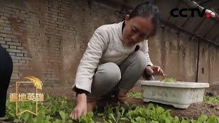 《遍地英雄》 20200503 石嫣:下乡种菜的女博士|CCTV农业
