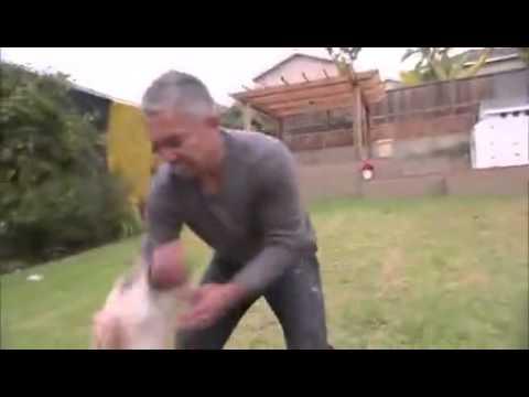 Dog Bites Trainer Hands