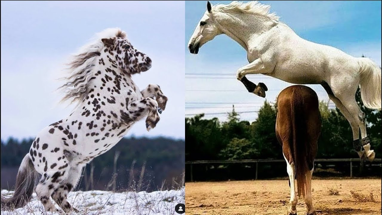 Horse SOO Cute! Cute And funny horse Videos Compilation cute moment #19