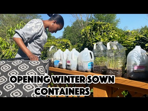 OPENING WINTER SOWN CONTAINERS?: A BEAUTIFUL NEST TV