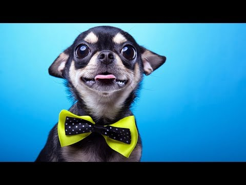 25 BIZARRE Dog Facts You Need To Know