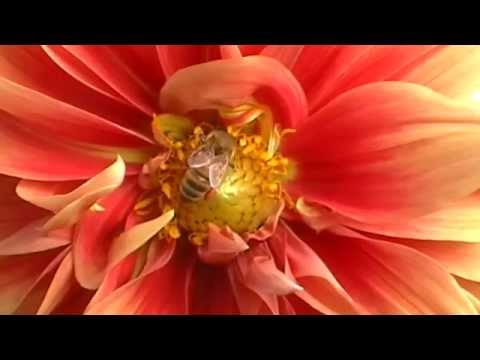 Flowers in the Garden (One hour with bird and water sounds) Meditation