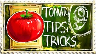 Growing Tomatoes Tips and Tricks - Suburban Homestead EP9
