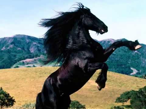Mal - Furia (Cavallo Del West)